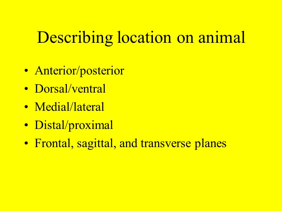 Describing location on animal
