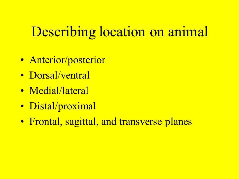 Describing location on animal