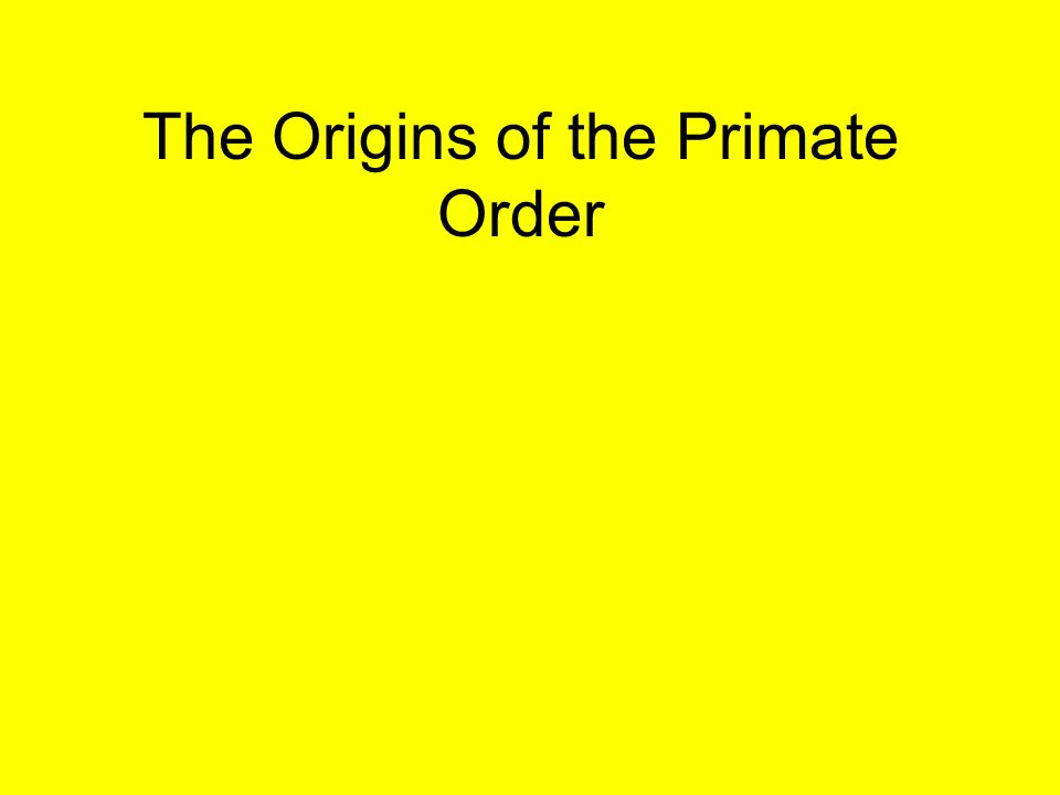 order of primate All monkeys are members of the suborder haplorrhini, which also includes apes and humans monkeys are also members of the kingdom animalia, the phylum chordata and the order primates the family.