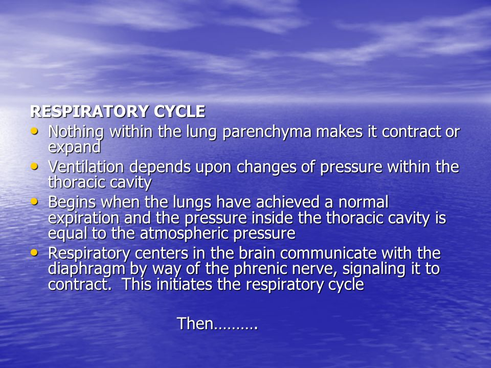RESPIRATORY CYCLE Nothing within the lung parenchyma makes it contract or expand.