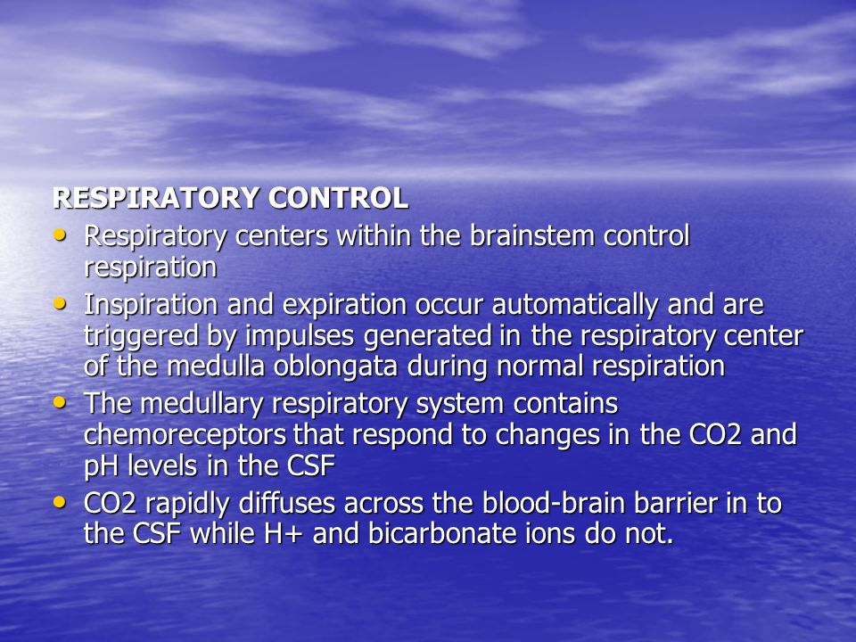 RESPIRATORY CONTROL Respiratory centers within the brainstem control respiration.