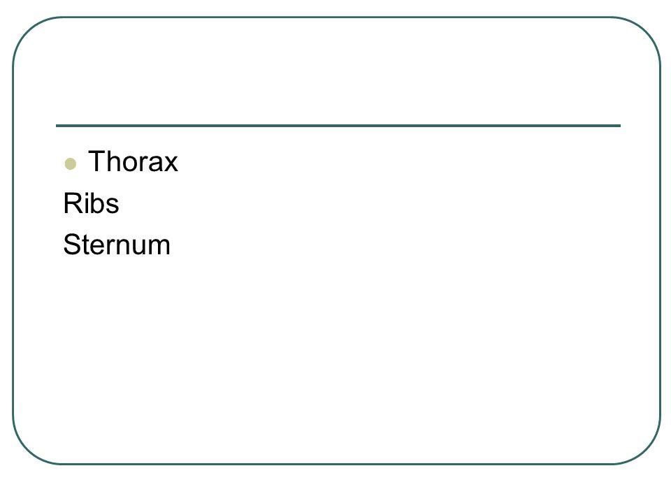 Thorax Ribs Sternum