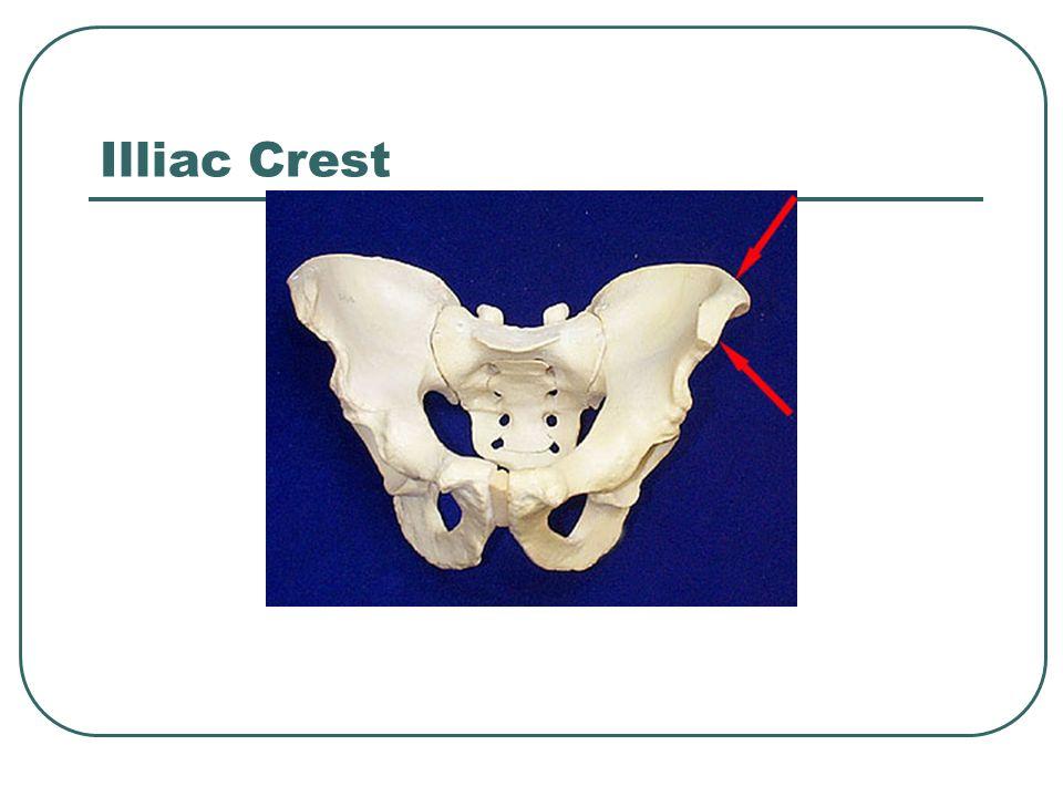 Illiac Crest Iliac Crest
