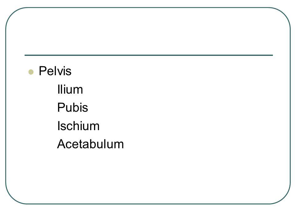 Pelvis Ilium Pubis Ischium Acetabulum