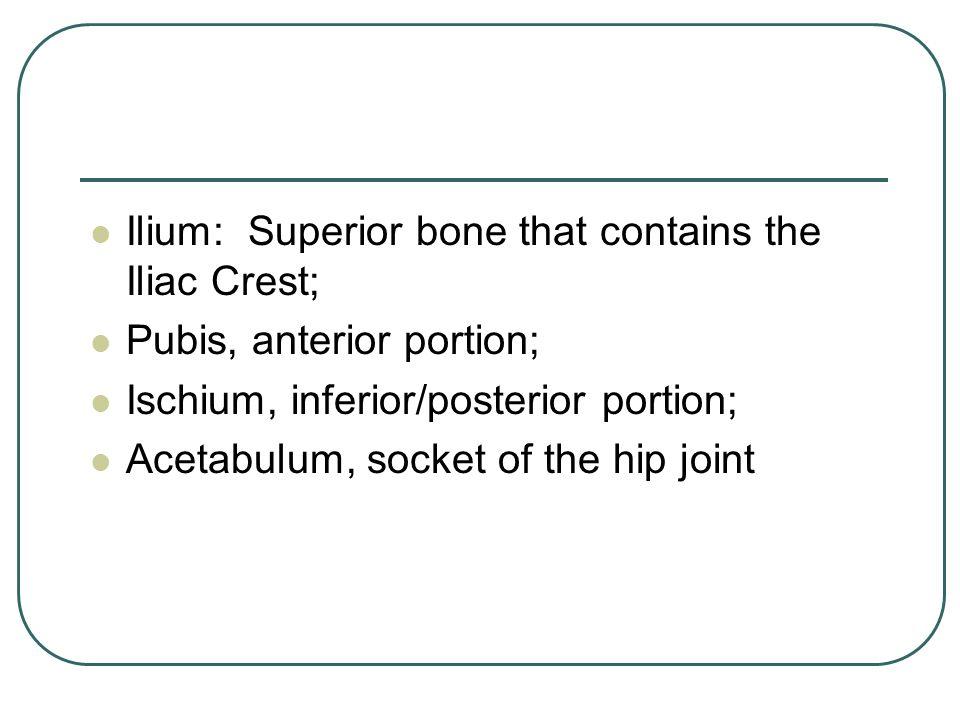 Ilium: Superior bone that contains the Iliac Crest;