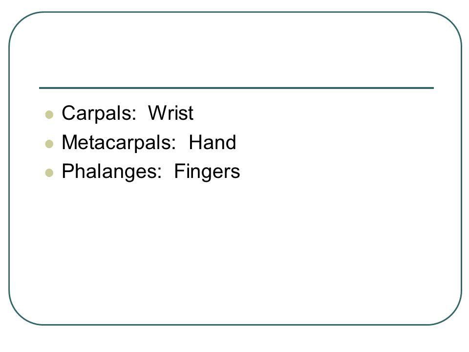 Carpals: Wrist Metacarpals: Hand Phalanges: Fingers