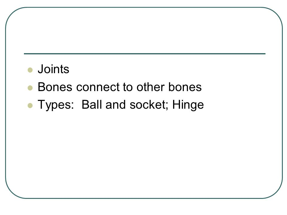 Bones connect to other bones Types: Ball and socket; Hinge