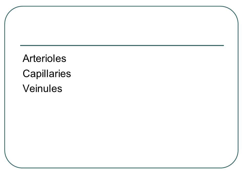 Arterioles Capillaries Veinules