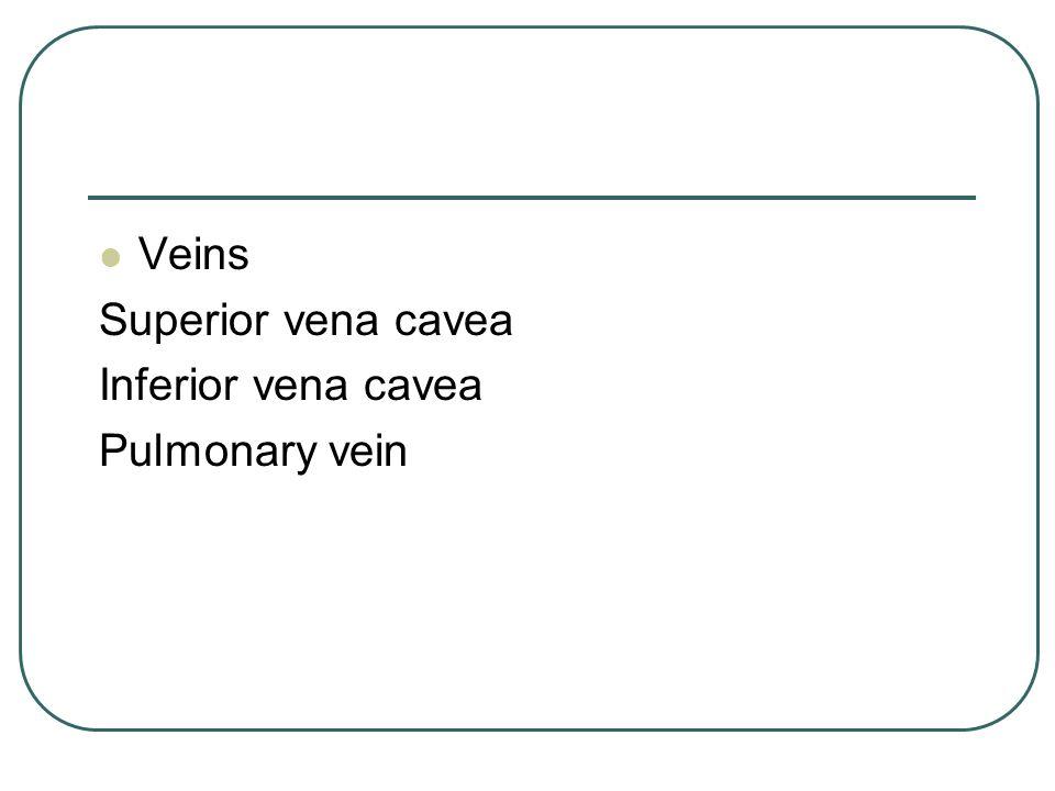 Veins Superior vena cavea Inferior vena cavea Pulmonary vein