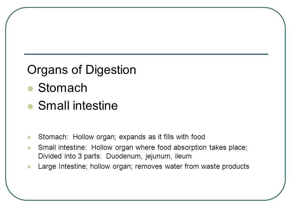 Organs of Digestion Stomach Small intestine