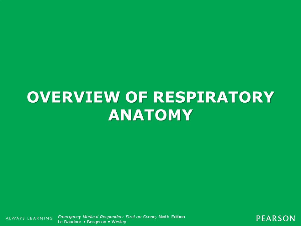 OVERVIEW OF RESPIRATORY ANATOMY