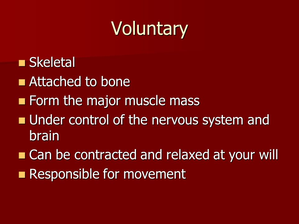 Voluntary Skeletal Attached to bone Form the major muscle mass