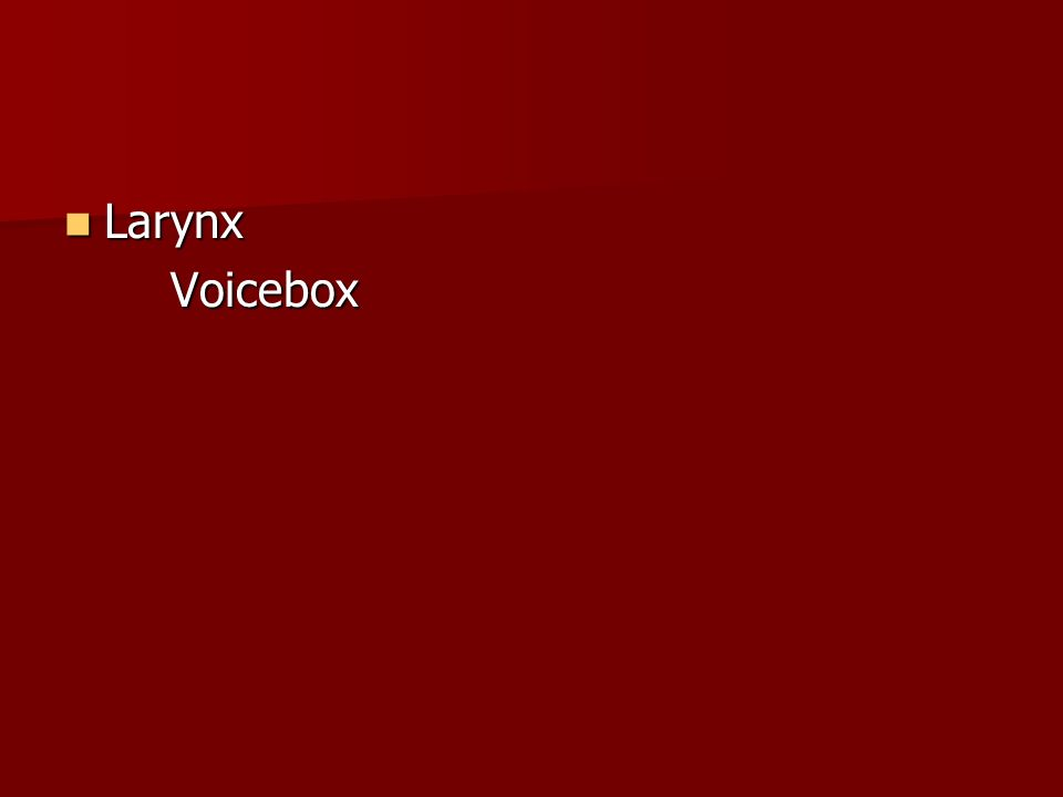 Larynx Voicebox