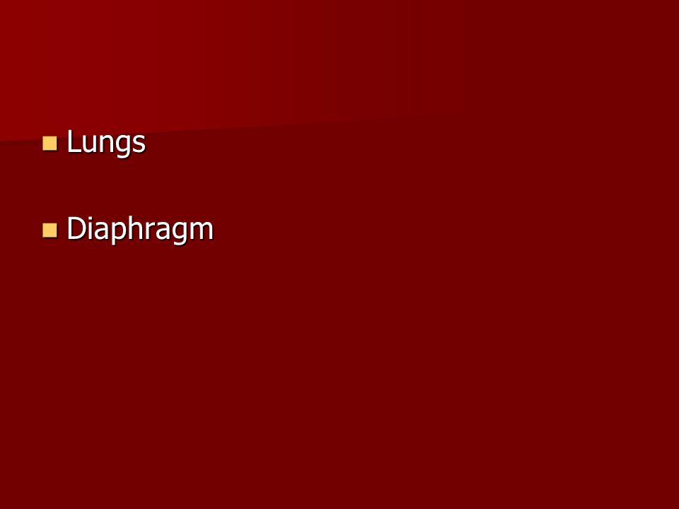 Lungs Diaphragm