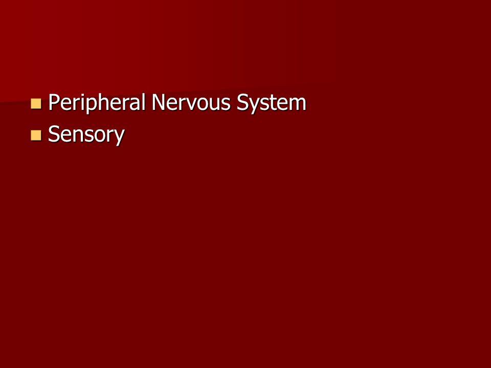 Peripheral Nervous System Sensory