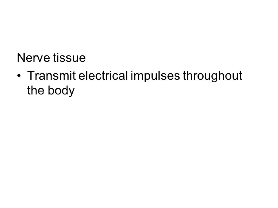 Nerve tissue Transmit electrical impulses throughout the body