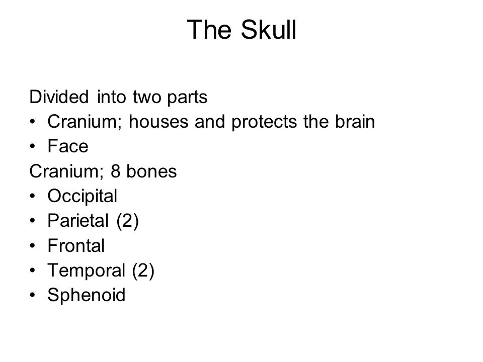The Skull Divided into two parts