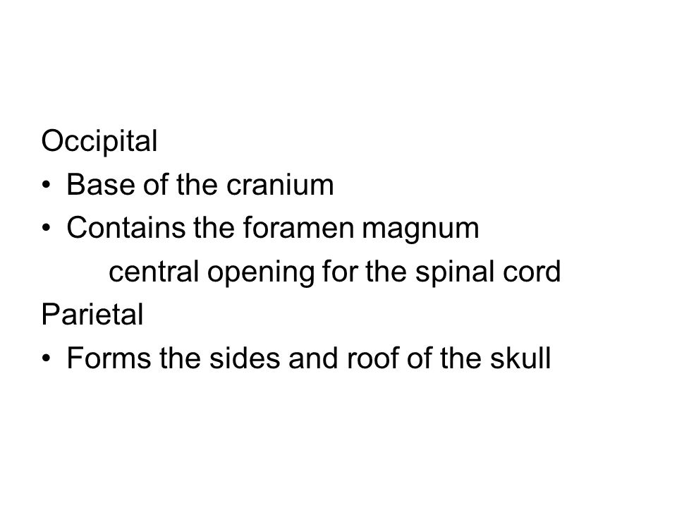 Occipital Base of the cranium. Contains the foramen magnum. central opening for the spinal cord. Parietal.
