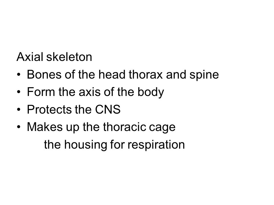 Axial skeleton Bones of the head thorax and spine. Form the axis of the body. Protects the CNS. Makes up the thoracic cage.