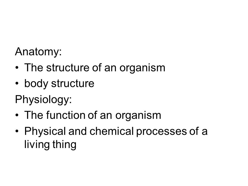 Anatomy: The structure of an organism. body structure.