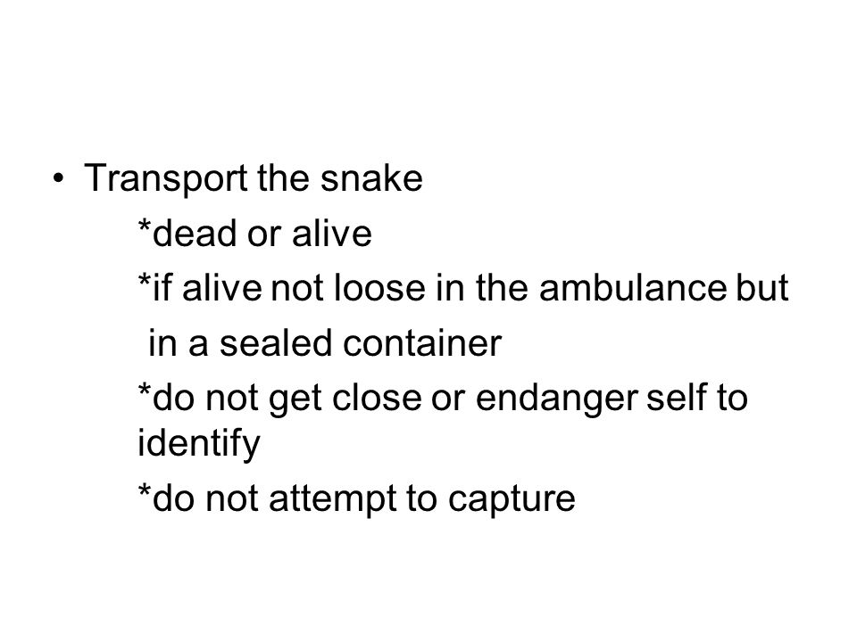 Transport the snake *dead or alive. *if alive not loose in the ambulance but. in a sealed container.