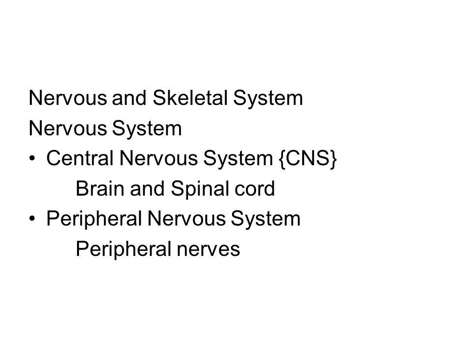 Nervous and Skeletal System