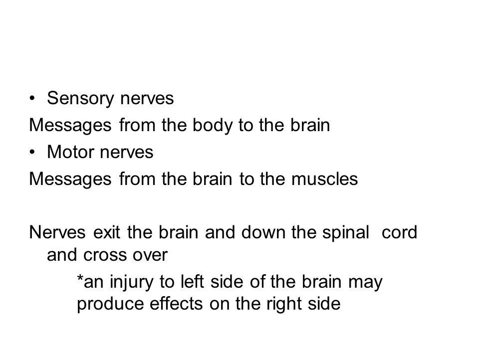 Sensory nerves Messages from the body to the brain. Motor nerves. Messages from the brain to the muscles.