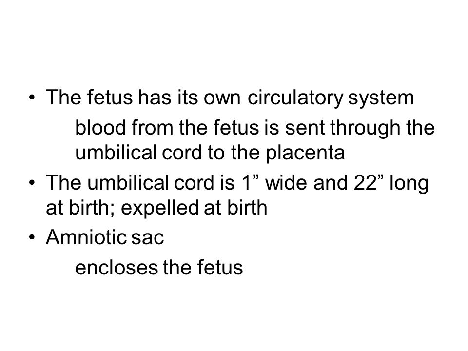 The fetus has its own circulatory system