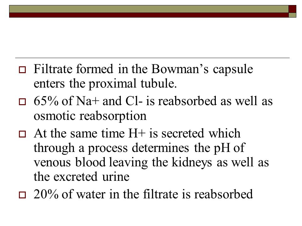 Filtrate formed in the Bowman's capsule enters the proximal tubule.