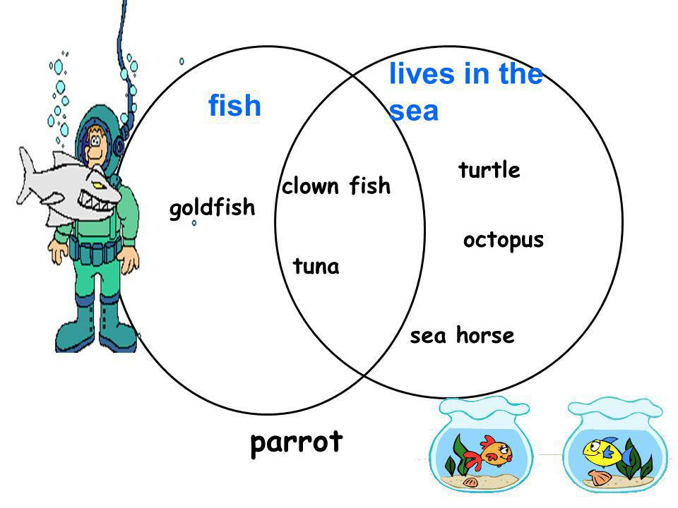 lives in the sea fish parrot turtle clown fish goldfish octopus tuna