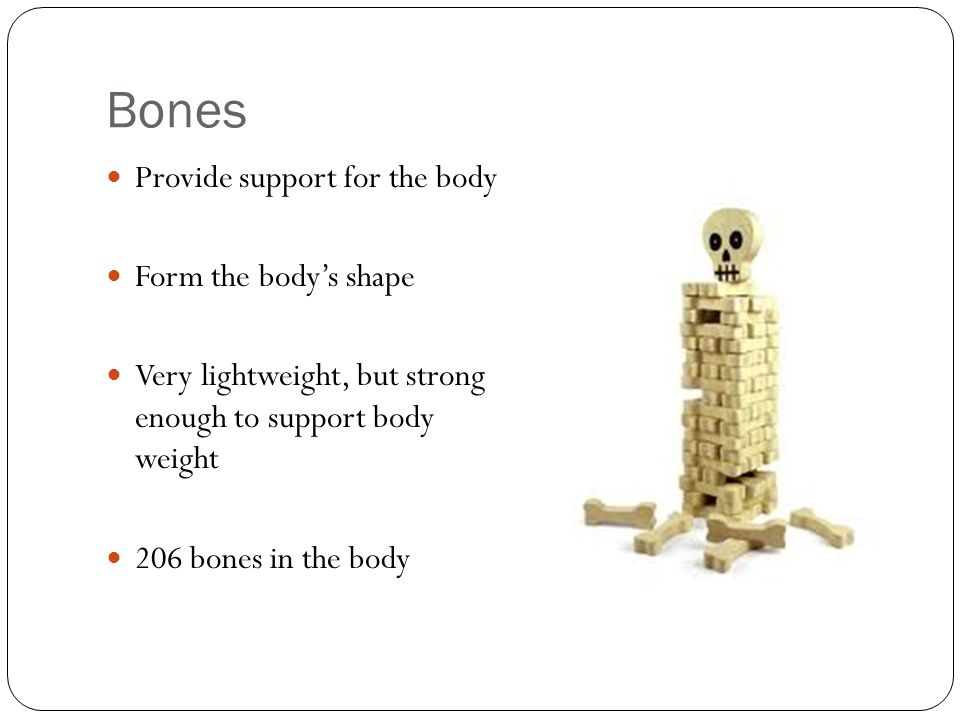 Bones Provide support for the body Form the body's shape