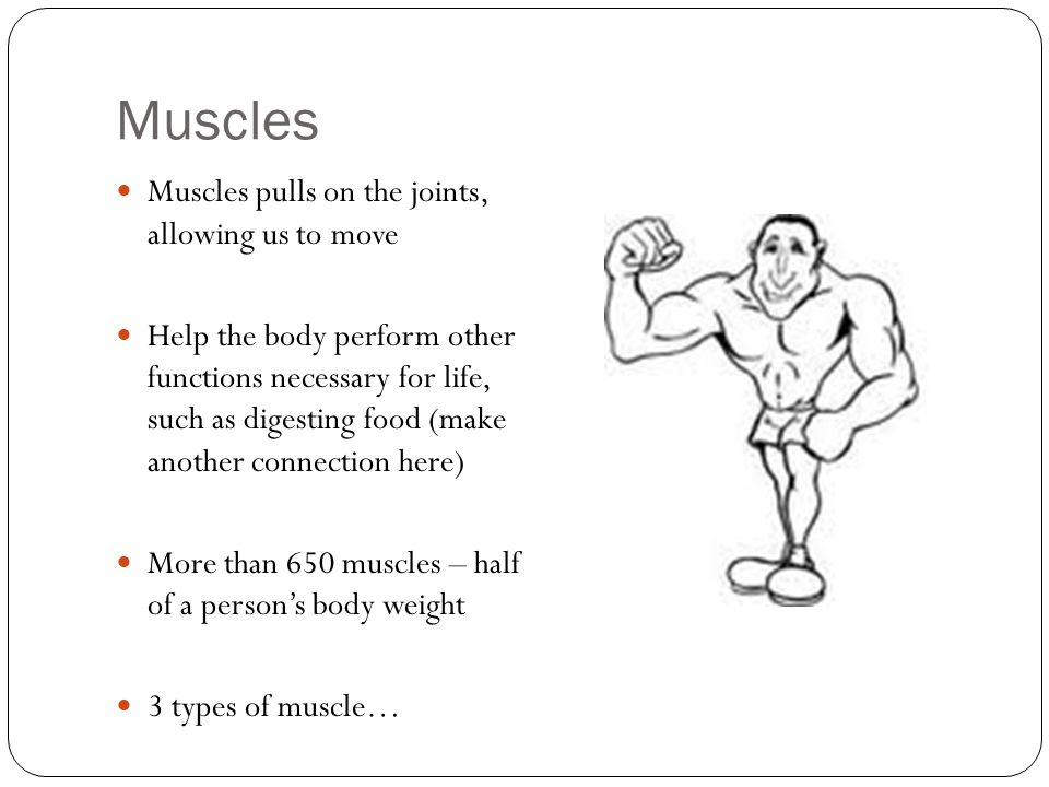 Muscles Muscles pulls on the joints, allowing us to move