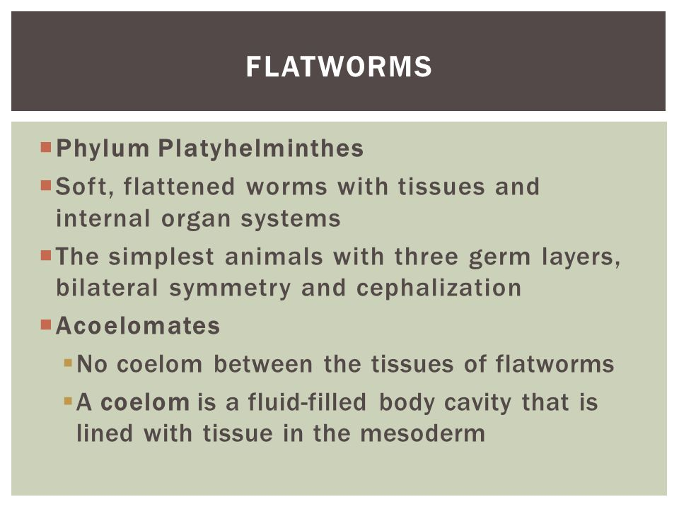 Worms and Mollusks Bio...