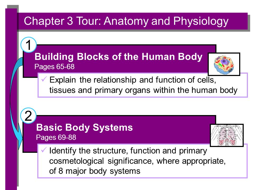Anatomy and physiology worksheet answers chapter 1