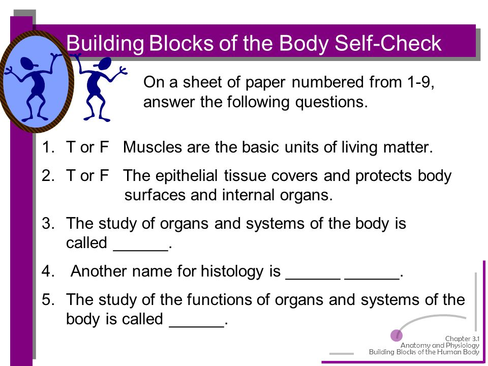 One thing I Know About Anatomy and Physiology Essay Sample