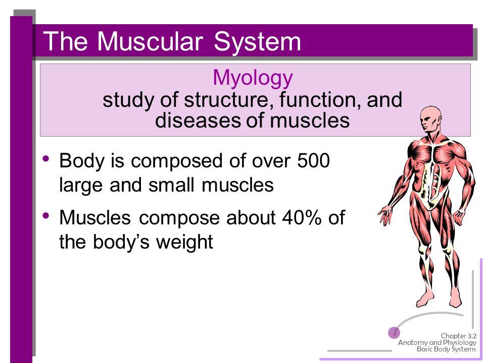 Muscular system | Learn Muscular Anatomy