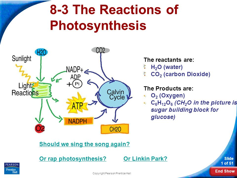 reactants of photsynthesis reaction In this article, we'll explore the light-dependent reactions as they take place during photosynthesis in plants we'll trace how light energy is absorbed by pigment molecules, how reaction center pigments pass excited electrons to an electron transport chain, and how the energetically downhill flow of electrons leads to synthesis of atp and.