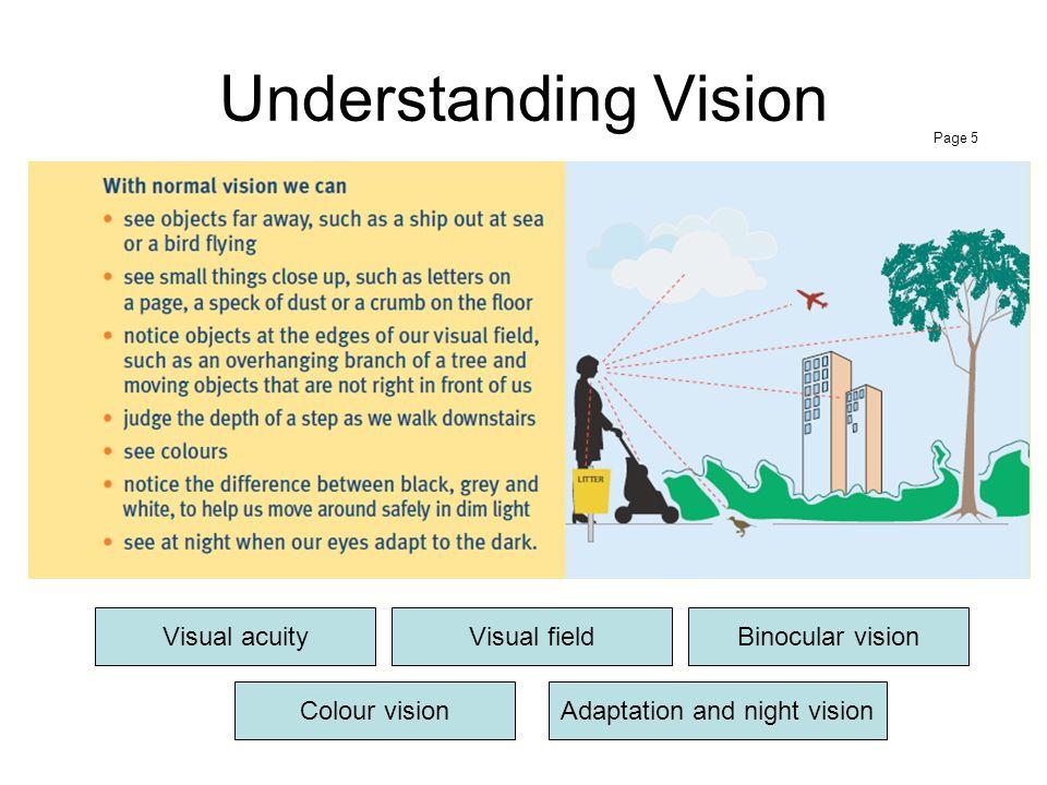 Adaptation and night vision