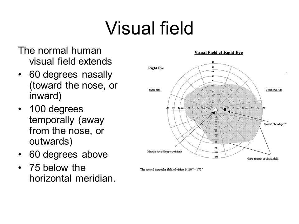 Visual field The normal human visual field extends