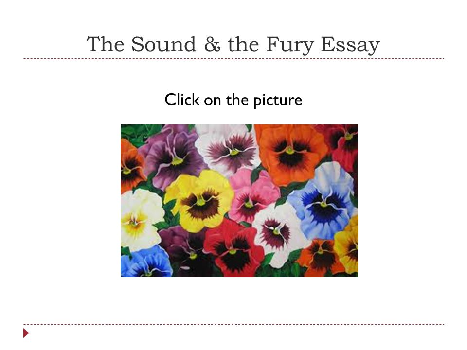 new essays on the sound and the fury The sound and the fury is a novel written by the american author william  faulkner it employs  new essays on the sound and the fury ed noel polk.