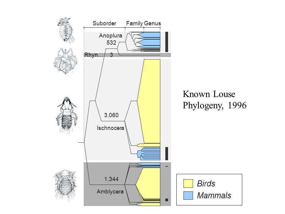 Anoplura Rhyn… Known Louse Phylogeny, 1996 Ischnocera Amblycera Birds
