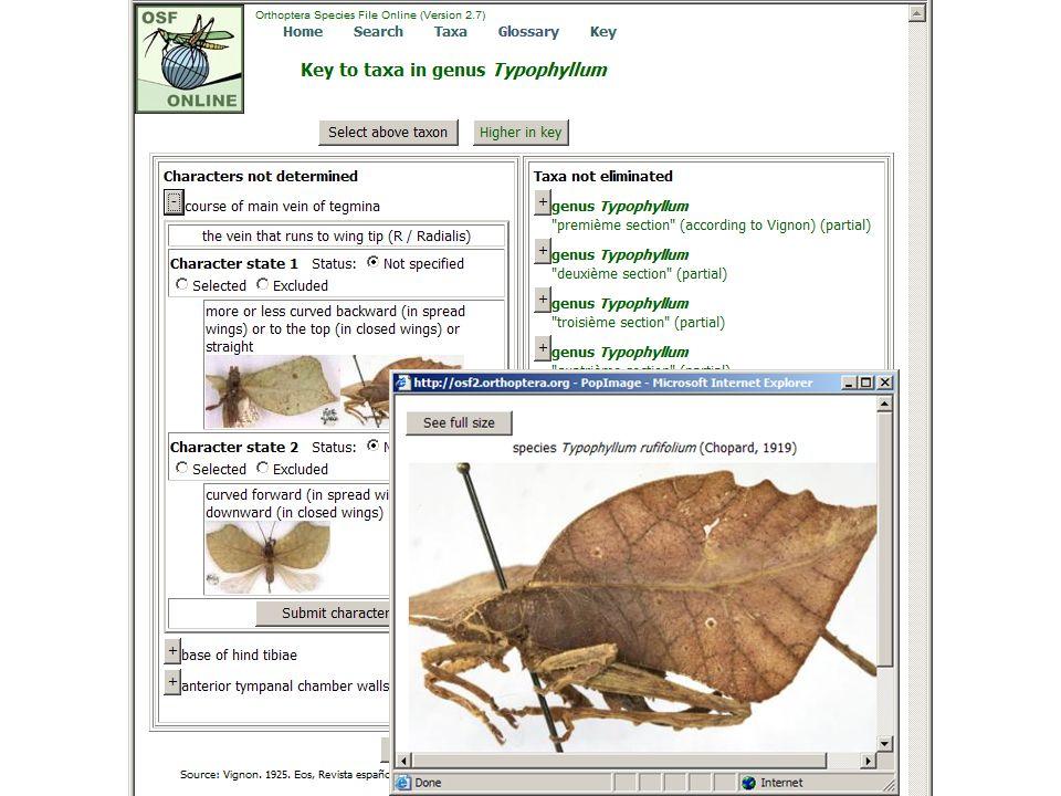 Typophyllum w/popup