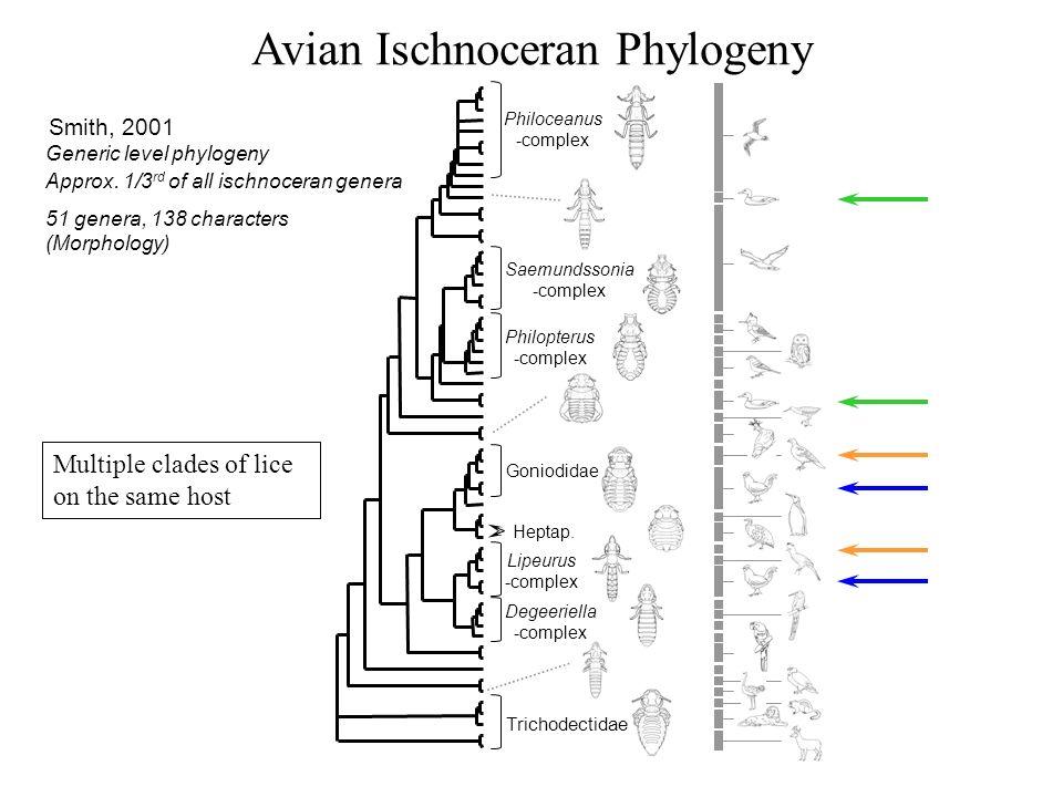 Avian Ischnoceran Phylogeny