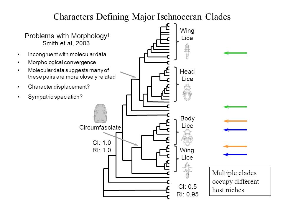 Characters Defining Major Ischnoceran Clades