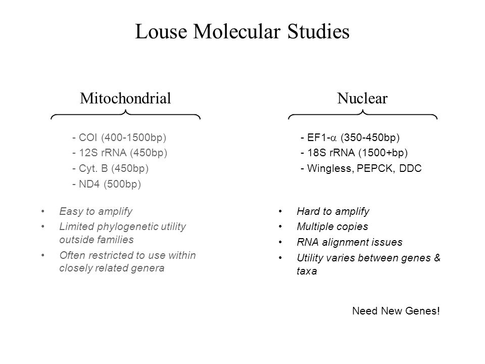 Louse Molecular Studies