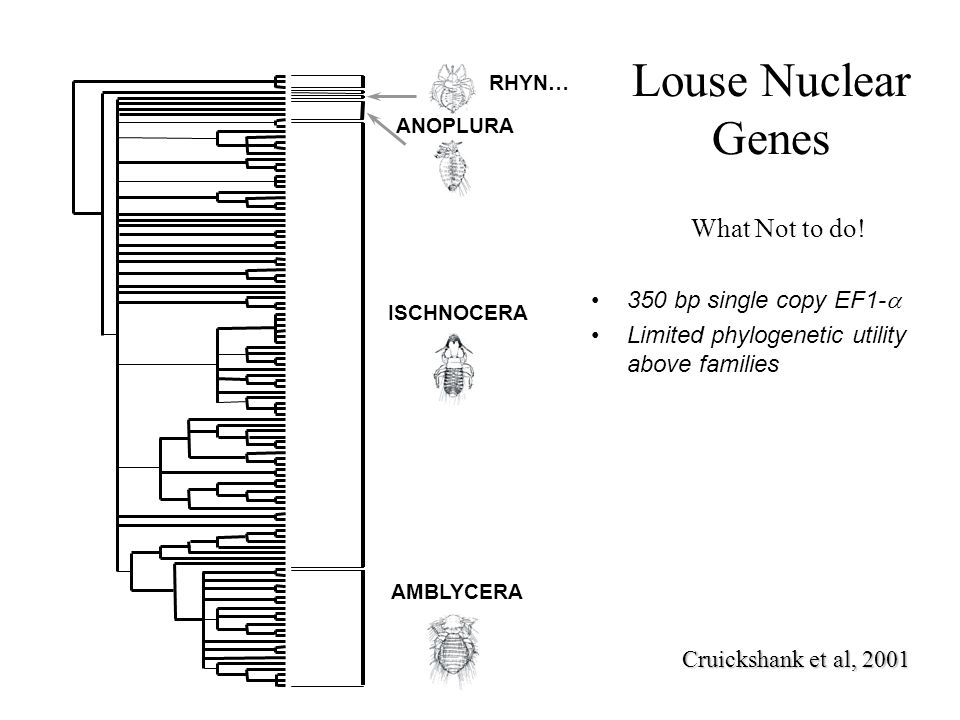 Louse Nuclear Genes What Not to do! 350 bp single copy EF1-a
