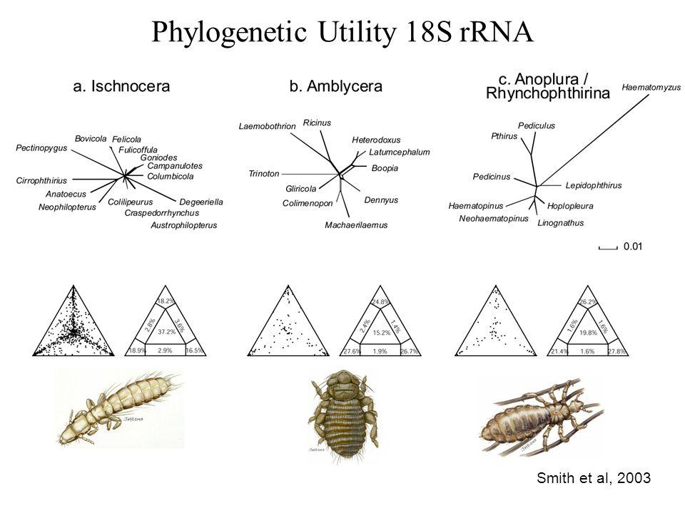 Phylogenetic Utility 18S rRNA