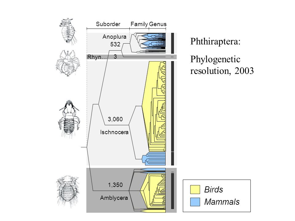 Phylogenetic resolution, 2003