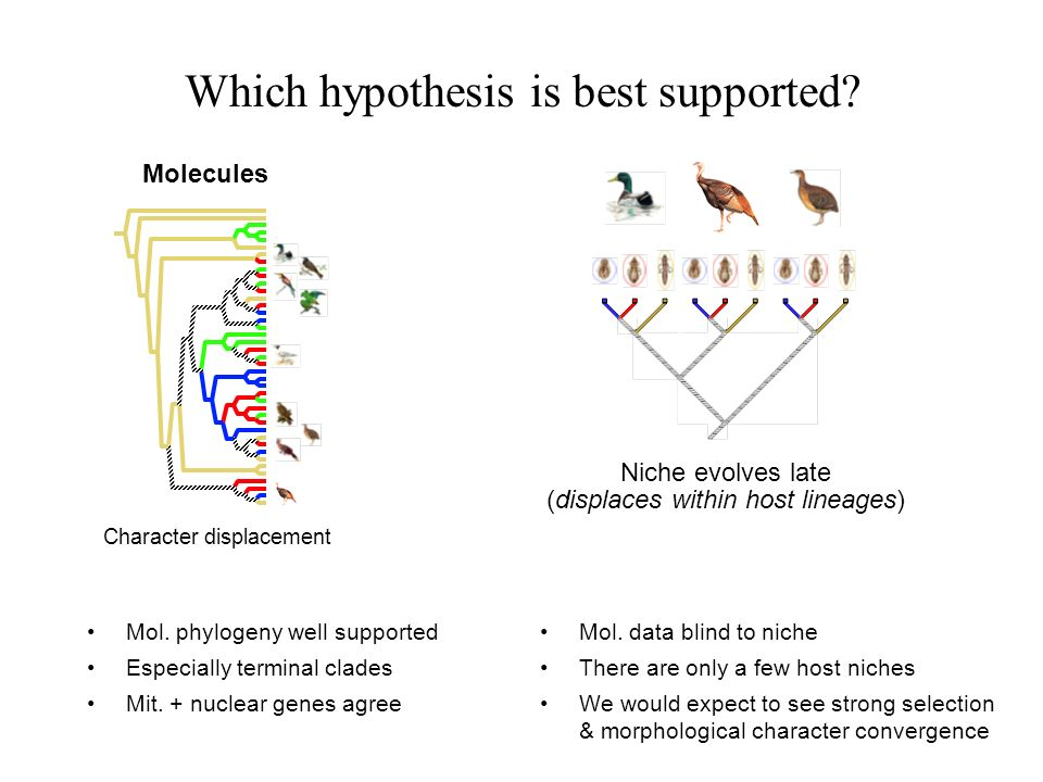 Which hypothesis is best supported