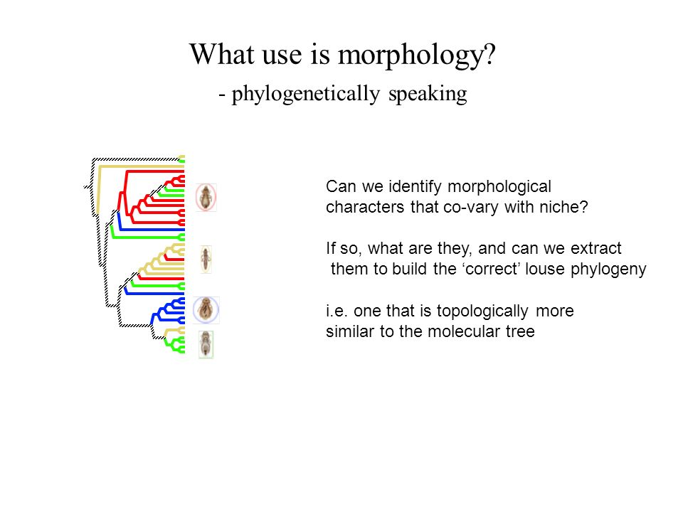 - phylogenetically speaking